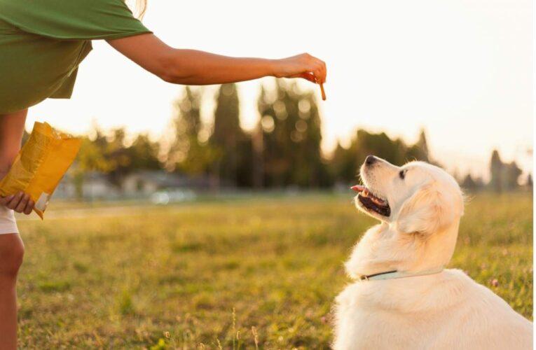 Tu Adiestrador Online puedes adiestrar a un perro online